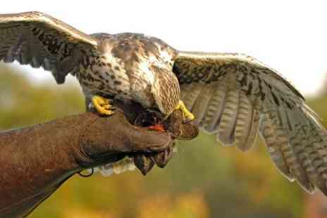 Cuerden Birds of Prey - 90 Minute Family Falconry Experience - Save 66%