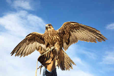 Park Rose Bird of Prey - Three hour hands on falconry experience  - Save 71%