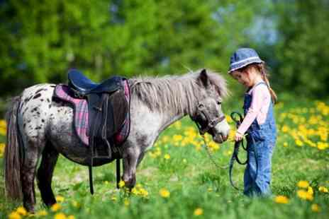 Hooves and Paws - Miniature Horse and Pony Party For Six - Save 66%