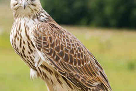 World of Wings - Two Hour Birds of Prey Experience - Save 58%
