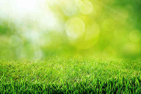 Greensleeves Lawn Care - 100sq. m lawn treatment - Save 50%