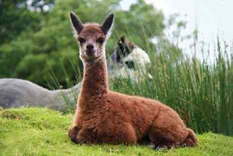 The Alpaca Park - Entry For Two Adults - Save 50%