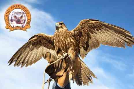 Rutland Falconry and Owl Centre - Two Hour Handling and Flying Experience - Save 72%