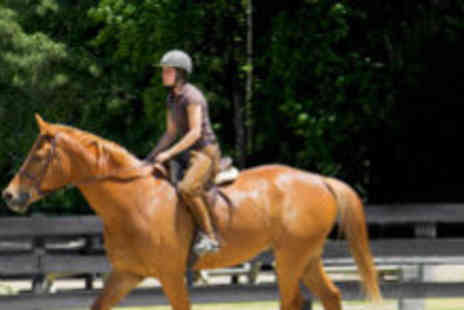 Continental Sport Horses - One hour private horse riding lesson - Save 64%