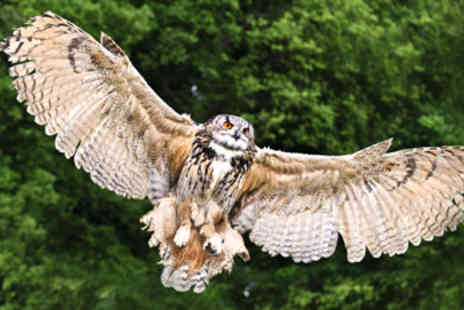 Rutland Falconry & Owl Centre - Two Hour Birds of Prey Experience - Save 75%