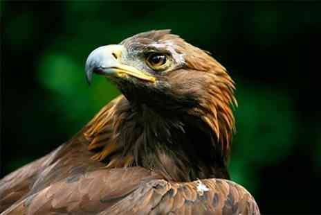 York Bird of Prey Centre - Hawk Walk or Falconry Experience - Save 60%