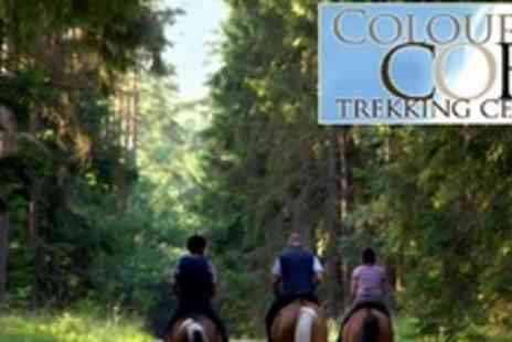 Coloured Cob - Horse Riding Woodland Trek - Save 52%