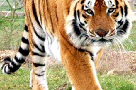 Noah's Ark Zoo Farm - Two Adult Days Entry Tickets to Zoo - Save 50%