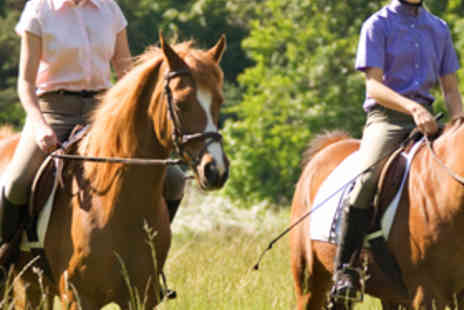 The Talland School - Hour Long Group Horse Riding Session - Save 75%