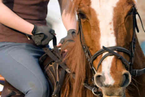 Moorwood Equine Livery - One 30 Minute Adult Private Horse Riding Lesson - Save 60%