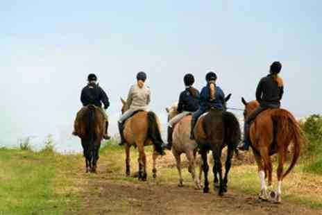 Hundleby Riding Centre - One Horse Riding Lessons - Save 56%
