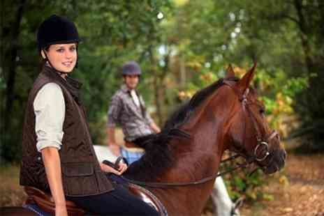 Pony Pursuits - One Hour Horse Riding For One - Save 49%