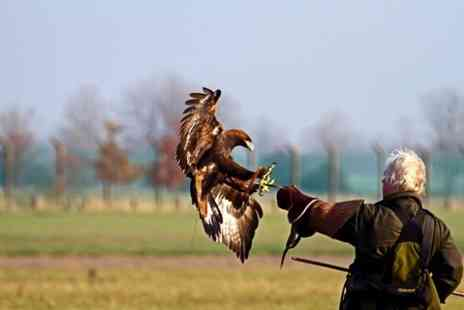 Chris Miller Falconry - Bird of Prey Photo Experience For One - Save 50%