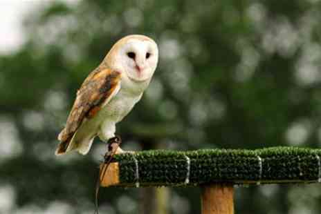 Yarak Birds of Prey Centre - Half-Day Bird Handling & Flying Experience - Save 58%