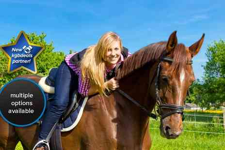 Welsh Equine Centre - Three hour horse riding session for one - Save 53%