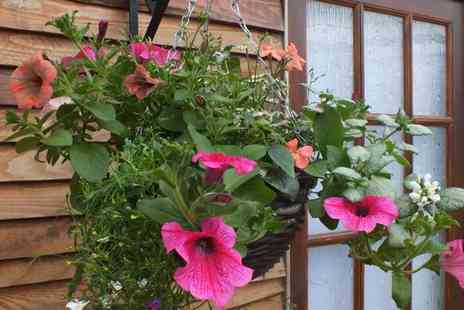 RP Online - 2 Pre Planted Rattan Summer Hanging Flower Baskets - Save 64%
