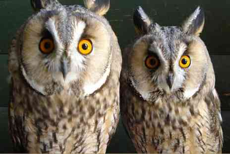 The English School of Falconry - A half day owl experience - Save 81%