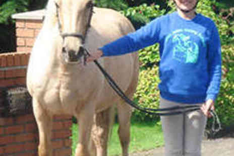 Glen Jakes Riding School - One Hour Group Horse Riding Lesson - Save 52%