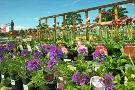 Carpenders Park Garden Centre - Plants, Trees and Herbs - Save 50%