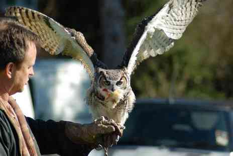 Stockley Farm Birds of Prey - One hour VIP hawk and owl taster experience for two - Save 59%