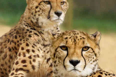 West Midland Safari Park - Safari Park Experience Including Entrance, Wristband, BBQ Lunch and Ice Cream - Save 23%