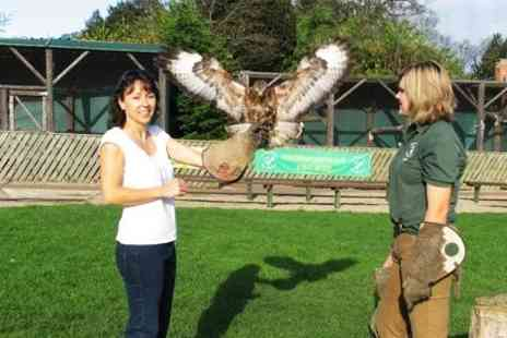 Falconry UK - Family Day Ticket With Access to Flying Displays - Save 68%