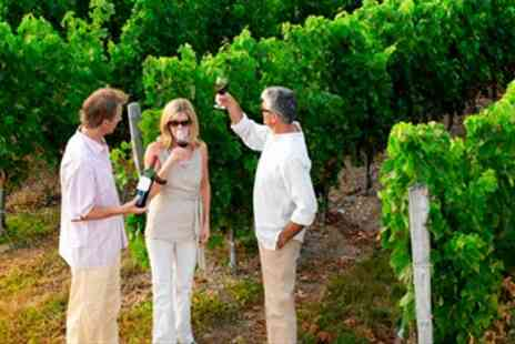 Sedlescombe Organic Vineyard - Sussex Vineyard Tour with Lunch - Save 41%