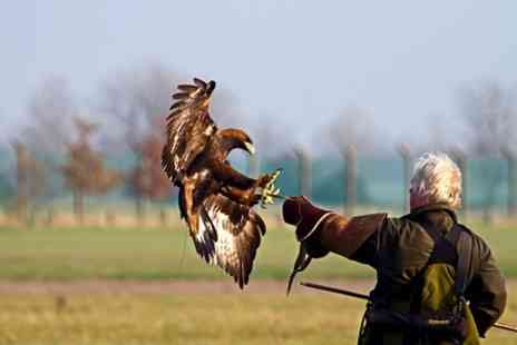 Chris Miller Falconry - Three Hour Falconry Experience For One - Save 70%