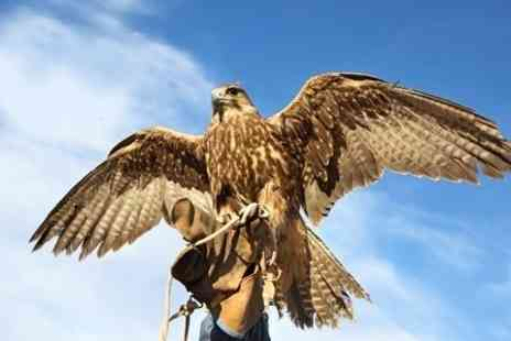 Rutland Falconry and Owl Centre - Two Hour Experience - Save 72%