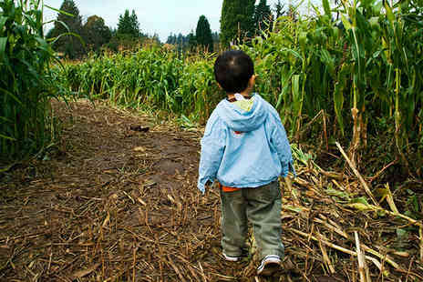 Kenyon Hall Farm - Maize Maze Entry For One Adult and One Child or Two Adults - Save 50%