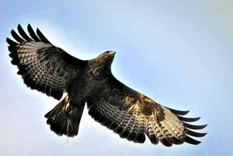 World of Wings - Falconry Experience - Save 58%