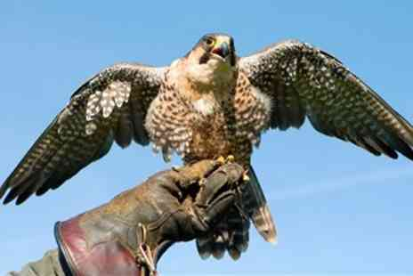 Millets Farm Falconry - Birds of Prey Experience for 4 - Save 45%