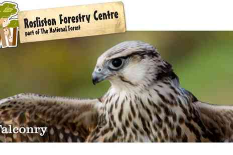 Rosliston Forestry Centre - Half Day Owl Handling and Falconry for 1 - Save 60%