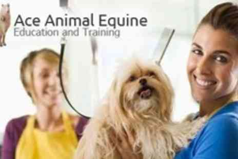 Ace Animal Equine & Training - Dog Wash, Dry, Groom and Nail Clip - Save 67%