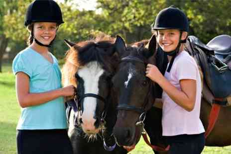 Lee Hill Riding School - Private Horse Riding Lessons - Save 60%