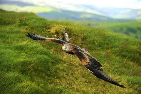 Raptor Experience Wales - Three Hour Falconry and Red Kite Experience - Save 38%