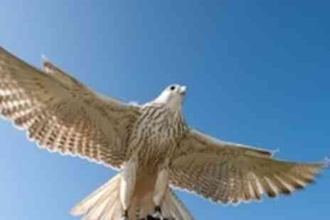 Adventure 001 - Three hour falconry session and guided museum tour - Save 63%