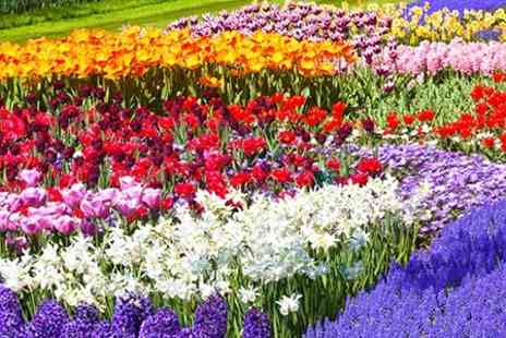 Gardeners Market - Ultimate Spring Bulb Collection 250 or 500 Bulbs - Save 50%