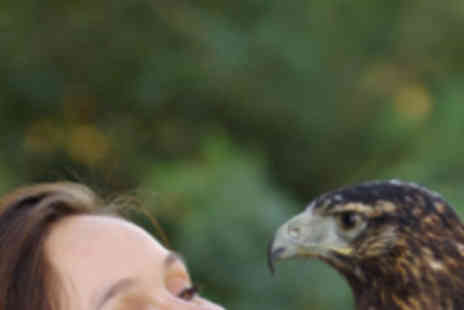Hillmotts - Falconry Experience and Stratford Armouries Tour - Save 68%