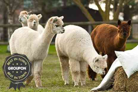 Alpaca Annie - Two Hour Alpaca Leading Hike For Two - Save 52%