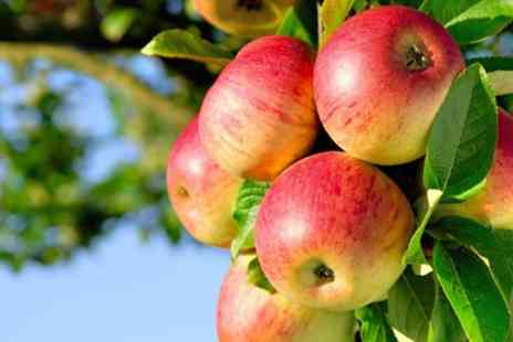White House Farming Partnership - Pick Your Own One Kilogram of Apples Pears or Plums - Save 50%