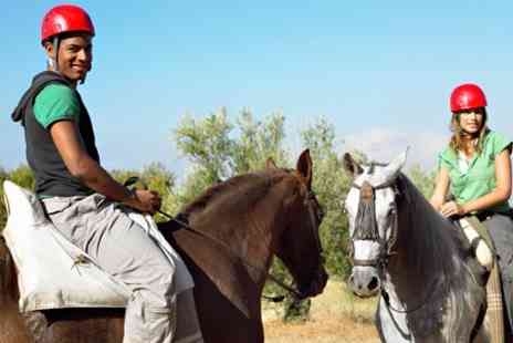 Sunshine Riding School - Beginners Lesson Plus 60 Minute Horseback Ride - Save 48%