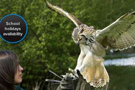 World of Wings - Two hour bird of prey experience for two - Save 60%