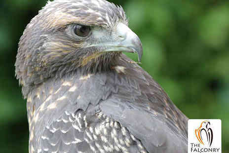The Falconry Centre - Entry to Birds of Prey Centre for Two Adults and up to Three Children - Save 57%