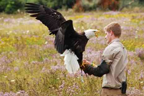 Hawk Conservancy Trust - Entry For Two People - Save 61%