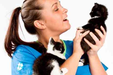 White Cross Vets - Vaccination and Health Check For Dog Cat or Rabbit - Save 33%