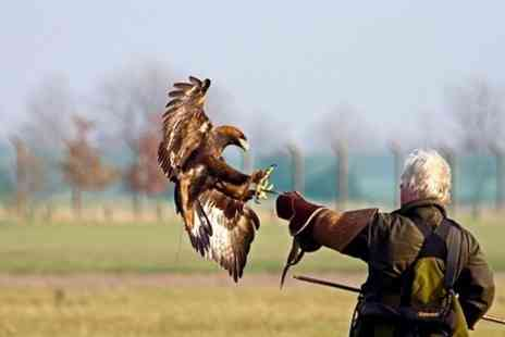 Chris Miller Falconry - Three Hour Falconry Experience - Save 70%