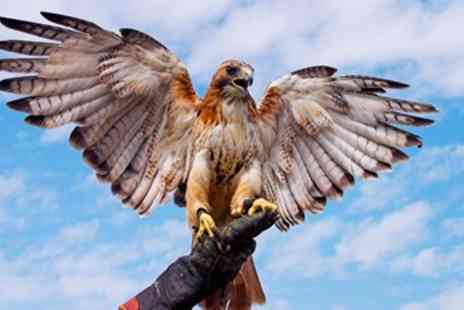 Lightwater Valley Falconry - Owl or Hawk Handling - Save 58%