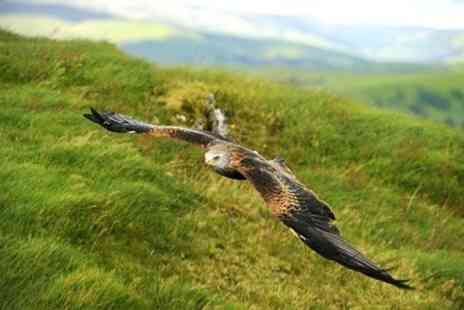 Raptor Experience Wales - Falconry Experience Wales Three Hour Birds of Prey Session - Save 71%