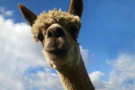 Mayfield alpacas - Entry With Drink For Three - Save 52%